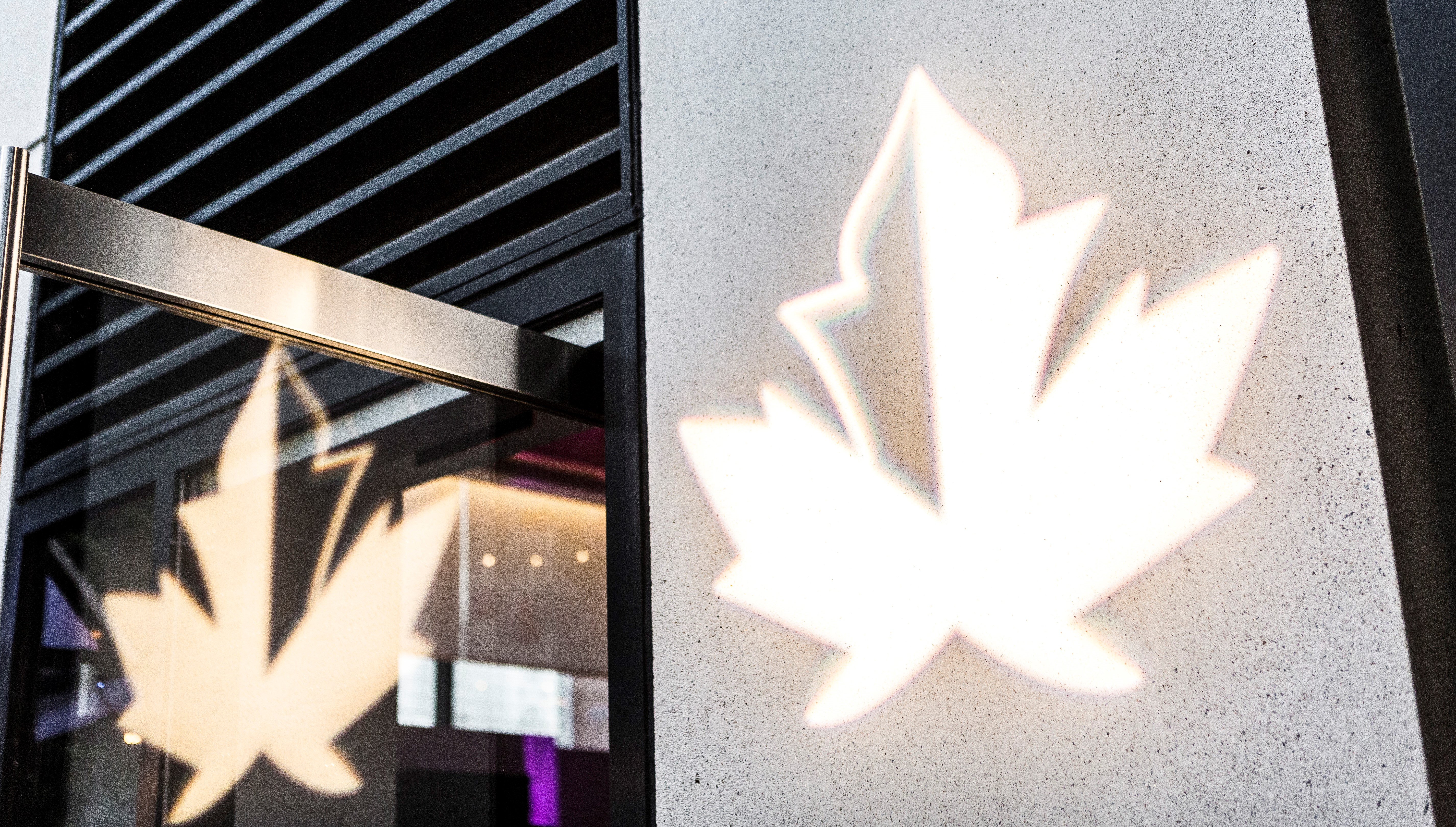 Image with the shadows of maple leafs