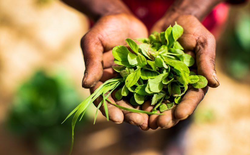 hands holding farm crop